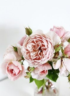 the most stunning blush flowers!