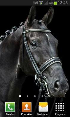 Dream horse ♥