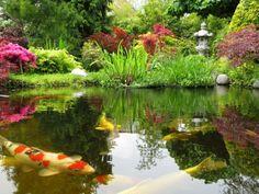Unique Koi Pond Ideas #5 Koi Fish Pond Garden