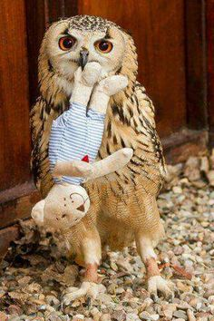 Oh, you know, just an owl and his bear
