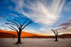 africa,african,dead tree,deadvlei,desert,forest,horizontal,namibia,namibian,sand,tree,woods, photo