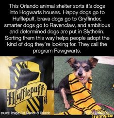 This Orlando animal shelter sorts it's dogs into Hogwarts houses. Happy dogs go to Hufflepuff, brave dogs go to Gryffindor, smarter dogs go to Ravenclaw, and ambitious and determined dogs are put in Slythen'n. Sorting them this way helps peo. Funny Animal Memes, Cute Funny Animals, Cute Baby Animals, Funny Cute, Funny Dogs, Cute Dogs, Funny Memes, Funny Videos, Animal Humor