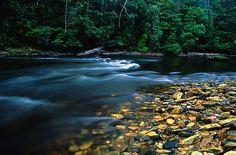 Tarkine Wilderness, Tasmania. Under threat from logging and mining.