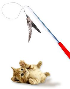 Bird Catcher Pro Cat Toy with Guinea Feather Exclusive Wand Extends to a Full 39Inches 24Inch Light Weight Cord with Natural Safety Feather Tail and Comfort Foam Handle *** Click on the image for additional details.Note:It is affiliate link to Amazon.