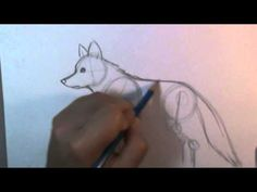 How to draw a wolf body - YouTube