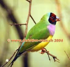 oiseaux exotiques - Recherche Google