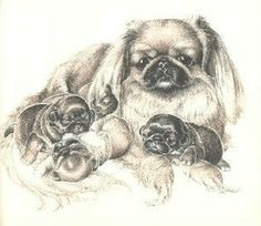 from Puppies For Keeps - a story about a Pekingese name Chi Ta and her cute little puppies Lucky, Mouse, Sugarplum and Star. All Dogs, Dogs And Puppies, Animals And Pets, Cute Animals, Fu Dog, Pekingese Dogs, My Animal, Pet Shop, Animals Beautiful