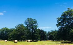 The park, hay on the Farm. Bangor, Oak Tree, Farm Wedding, Wedding Venues, Wedding Reception Venues, Wedding Places, Bangor Maine, Wedding Locations