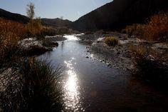 The Amargosa River Defies the Desert