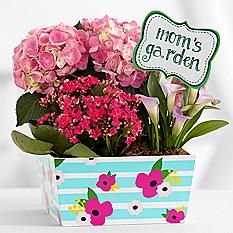 Mom's Pink Flowering Market Garden