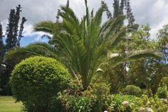 Bosque Palmas – Hacienda el Salitre