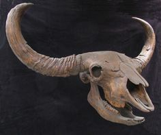 Bison Skull - Gaston Design, Inc.
