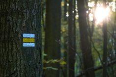 yellow guide mark on a tree to the sun  #sunset #sign #mark #tree #photography  #forest #sun #CzechRepublic #czech #tourist #autumn