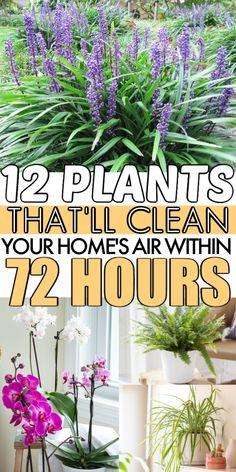 Air Cleaning Plants, Air Plants, Indoor Plants Clean Air, Indoor Herbs, Cactus Plants, Planting Succulents, Planting Flowers, Moss Garden, Succulent Planters