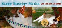 Cat Wisdom 101 Top Cat Merlin Celebrates 20th Birthday with Odin and Domino