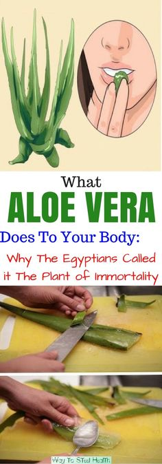 As a matter of fact, Aloe Vera has been long used for medicinal purposes and had a special place in Greek, Egyptian, and Roman culture.