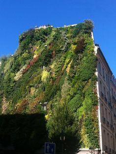 Mur végétal Rue des Petits Carreaux. Paris.
