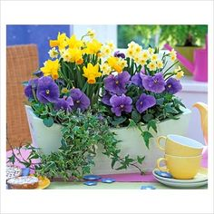 Perfect Fairy Garden flowers: Narcissus - Miniature Daffodils and Viola - Pansies