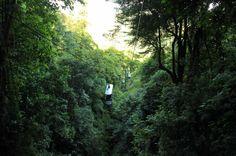 rainforest adventures aerial tram top   - Costa Rica