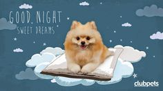 πραγματικά όνειρα γλυκά...