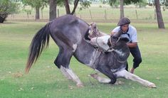 A gaucho (Argentine cowboy) performs for an MBA group at a ranch in Argentina.