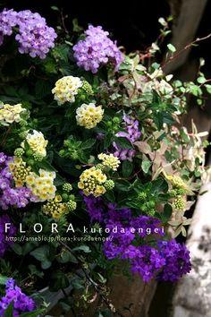フローラのガーデニング・園芸作業日記-ランタナ・タピアンの寄せ植え