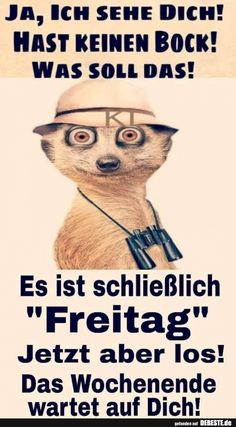 Ja, ich sehe dich!   Lustige Bilder, Sprüche, Witze, echt lustig You Funny, Really Funny, Funny Jokes, Workout Humor, Picture Quotes, Funny Pictures, Sayings, Fitness, Friday