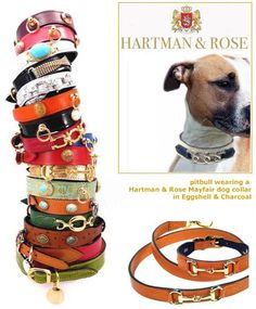 "Leather designer dog collars by Hartman and Rose, colorful, distinctive -- love them! Neck sizes from 8"" up to 24"".  Lovely pitbull, too. #dogs"