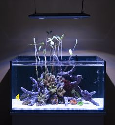 The new Kessil LED fixture is perfectly suited to light up the Fusion Lagoons Seahorse Aquarium, Coral Aquarium, Aquarium Ideas, Aquarium Design, Marine Aquarium, Saltwater Aquarium, Reef Tanks, Fish Tanks, Reef Aquascaping