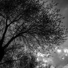 Evening Branch