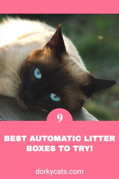 There are certain advantages to using self-cleaning litter boxes, and there are also some disadvantages. Of course, depending on your needs, you can decide to use one. Automatic litter boxes differ from one another in the way they operate and how they clean. Therefore, one can fit you best than another.cats litter box, cats health, cats litter, cats hidden litter box, cats care