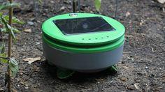 Tertill – Le robot qui arrache les mauvaises herbes