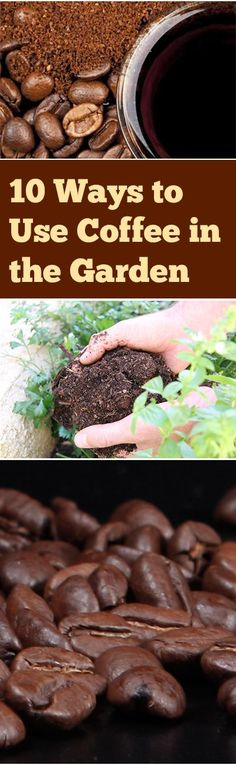 How to Use Coffee in the Garden- Great gardening ideas, tips and tricks for using coffee grounds in your ground! Lawn And Garden, Garden Soil, Garden Compost, Garden Tips, Garden Ideas, Edible Garden, Herb Garden, Garden Projects, Snails In Garden
