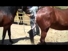 Best Horse Mating Videos - Mating in Slow Motion - YouTube
