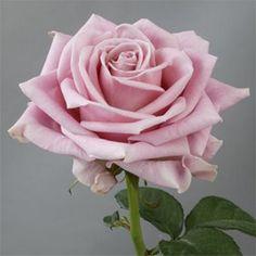 The Gorgeous Keano Rose A Beautiful Dusky Pink July Wedding 2017
