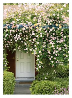Rose-framed doorway