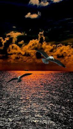 Galls over a sunset lit ocean