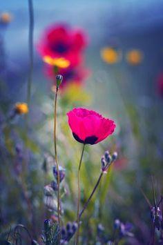 flower - Google'da Ara