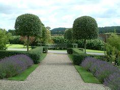 Image result for standard trees