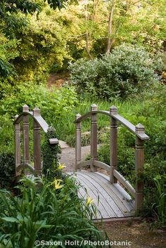 (Secret) Garden - small wooden bridge in path over creek drainage with Hemerocallis vespertina in Quarryhill Botanical Garden
