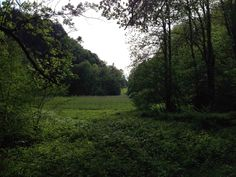 Trail Götzis / Vorarlberg. Foto@Tschola