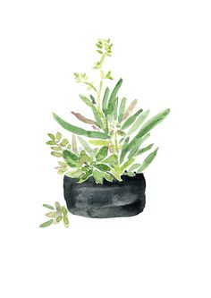 Art print Succulents in Black planter watercolor by TheJoyofColor