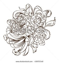 Find Japanese Flower Tattoo Chrysanthemum Flower Blossoms stock images in HD and millions of other royalty-free stock photos, illustrations and vectors in the Shutterstock collection. Thousands of new, high-quality pictures added every day. Chrysanthemum Drawing, Japanese Chrysanthemum, Chrysanthemum Flower, Japanese Flowers, Japanese Tattoo Art, Japanese Tattoo Designs, Flower Tattoo Designs, Tattoo Flowers, Japanese Flower Tattoos