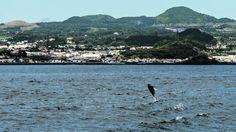 Moby Dicktours. Baleias no canal sem temporal #acores