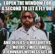 I Open The Window To Let A Fly Out Flies, Mosquitos, Moths