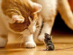 Bitte bitte, fress' mich nicht. Meine Mami wartet zu Hause! 😢