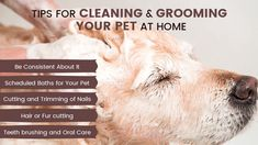 Brush your pet regularly. Stay on top of hair mats. Schedule regular baths. Choose a shampoo made for pets. Don't go for the tomato juice when skunked. Dog Grooming Clippers, Dog Grooming Tips, League City, Animal House, Pet Health, Dog Training, Your Pet, Tomato Juice, Cleaning
