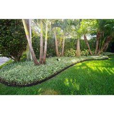 62 Best Ecoborder Images In 2020 Landscape Edging Green 640 x 480
