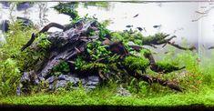 Layout 86 - Stuart Worrall - Tropica Aquarium Plants