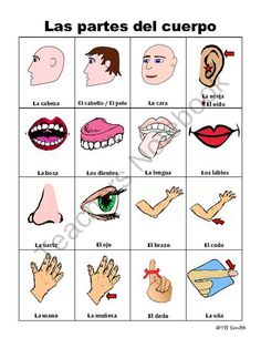 Spanish Body Parts PICTURE Notes product from Spanish the easy way! on TeachersNotebook.com